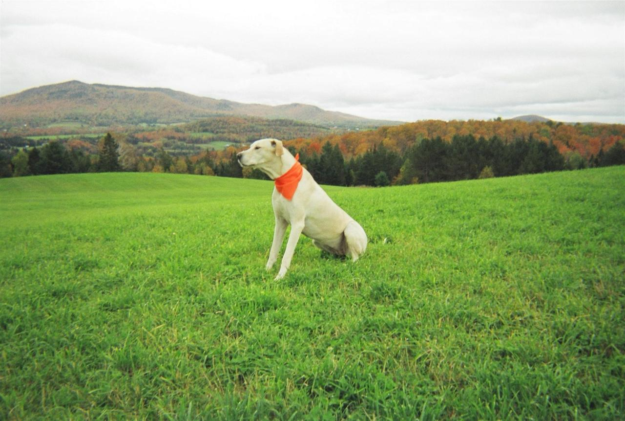 dog-with-view-1.jpg.1920x0 (1).jpg
