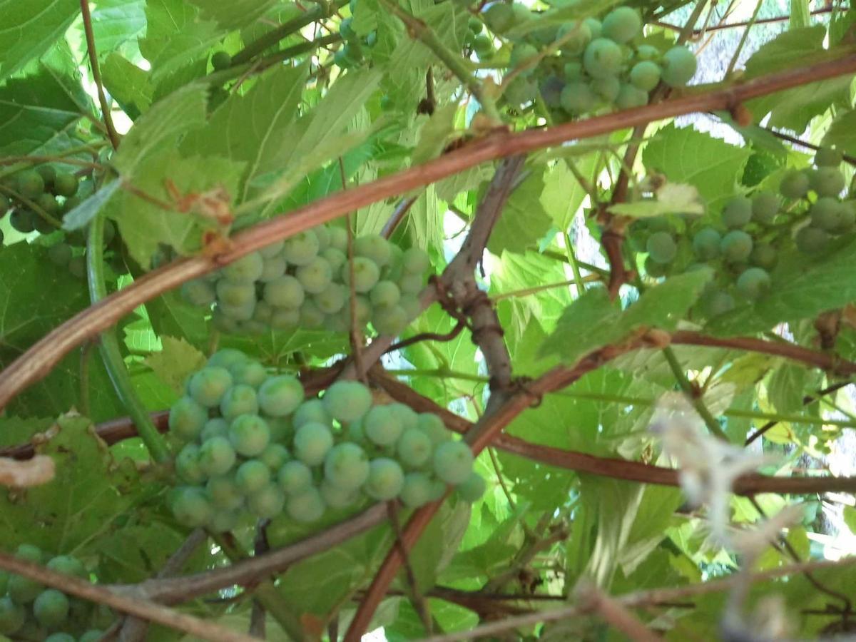 grapesporch2013.jpg.1920x0.jpg