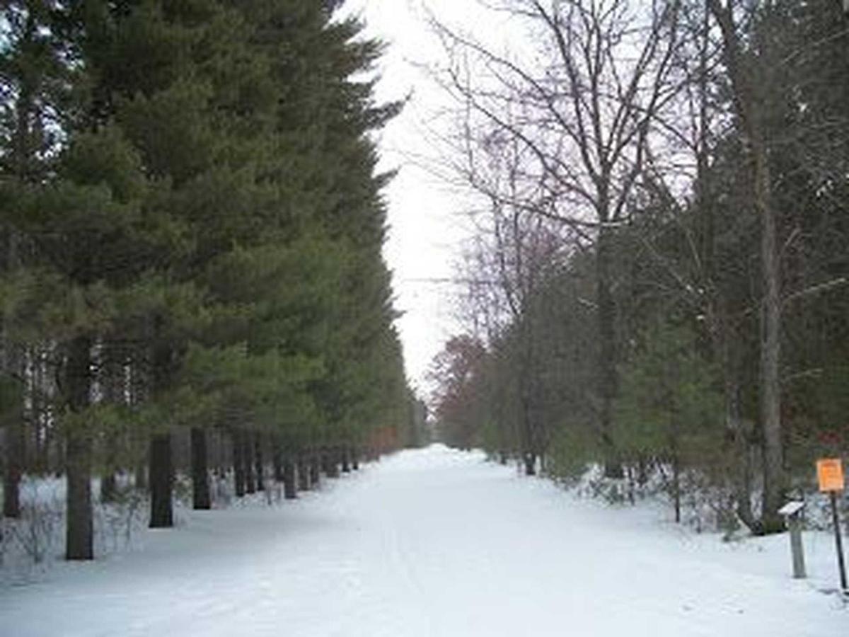 cross-country-ski-trail-hartman-creek-state-park.jpg.1920x0.jpg