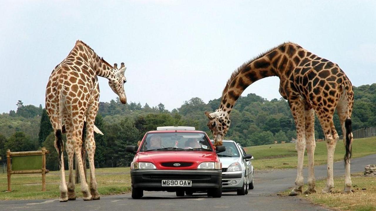 été-attraction-7-parc-safari-1-copie-copie.jpg.1024x0.jpg