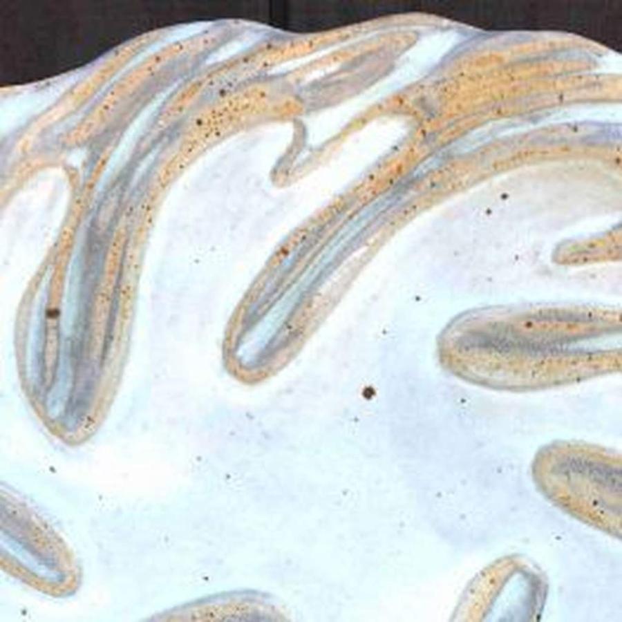 large-white-kelp-for-slider.jpg.1024x0.jpg