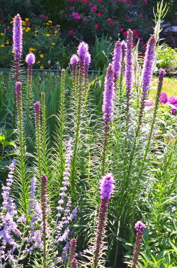 12-gardens45-1.jpg.1920x0.jpg