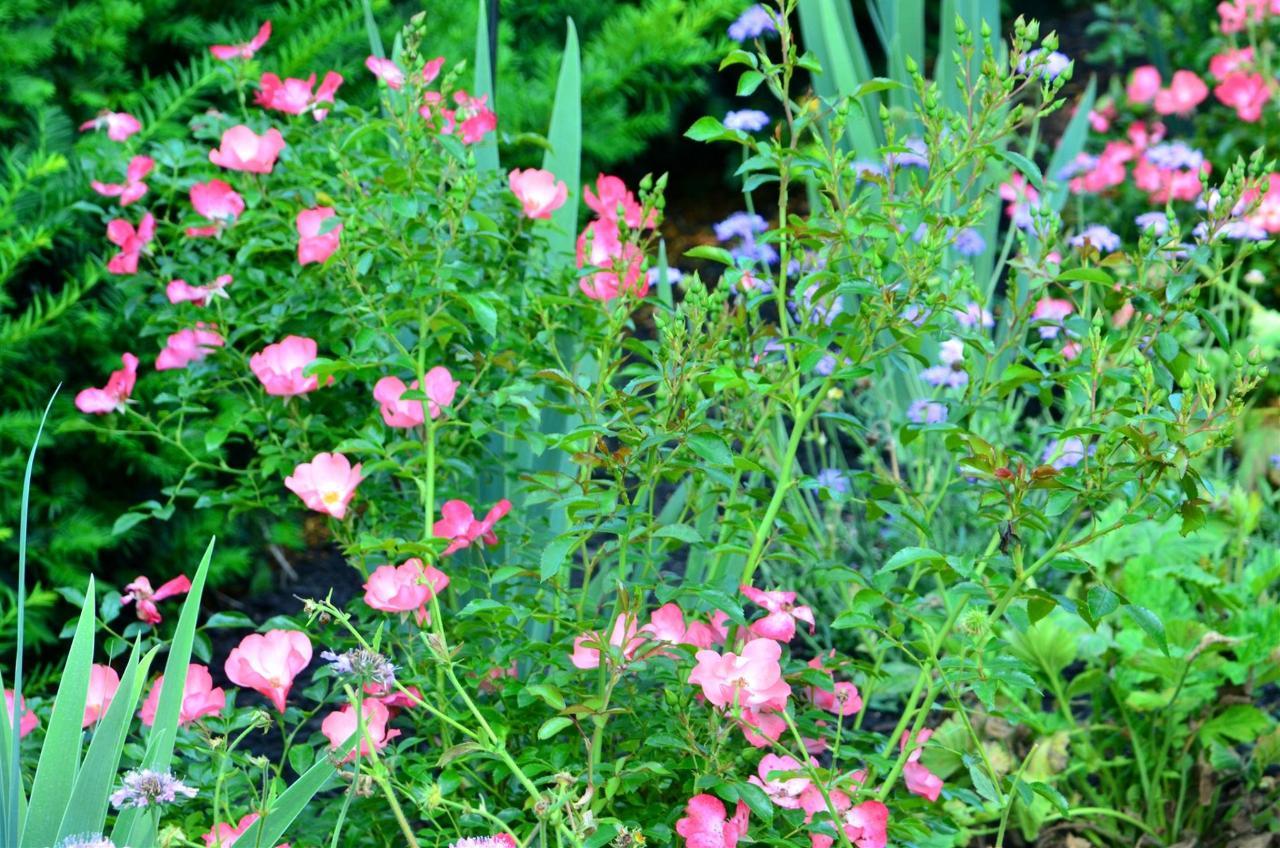 12-gardens9.jpg.1920x0.jpg