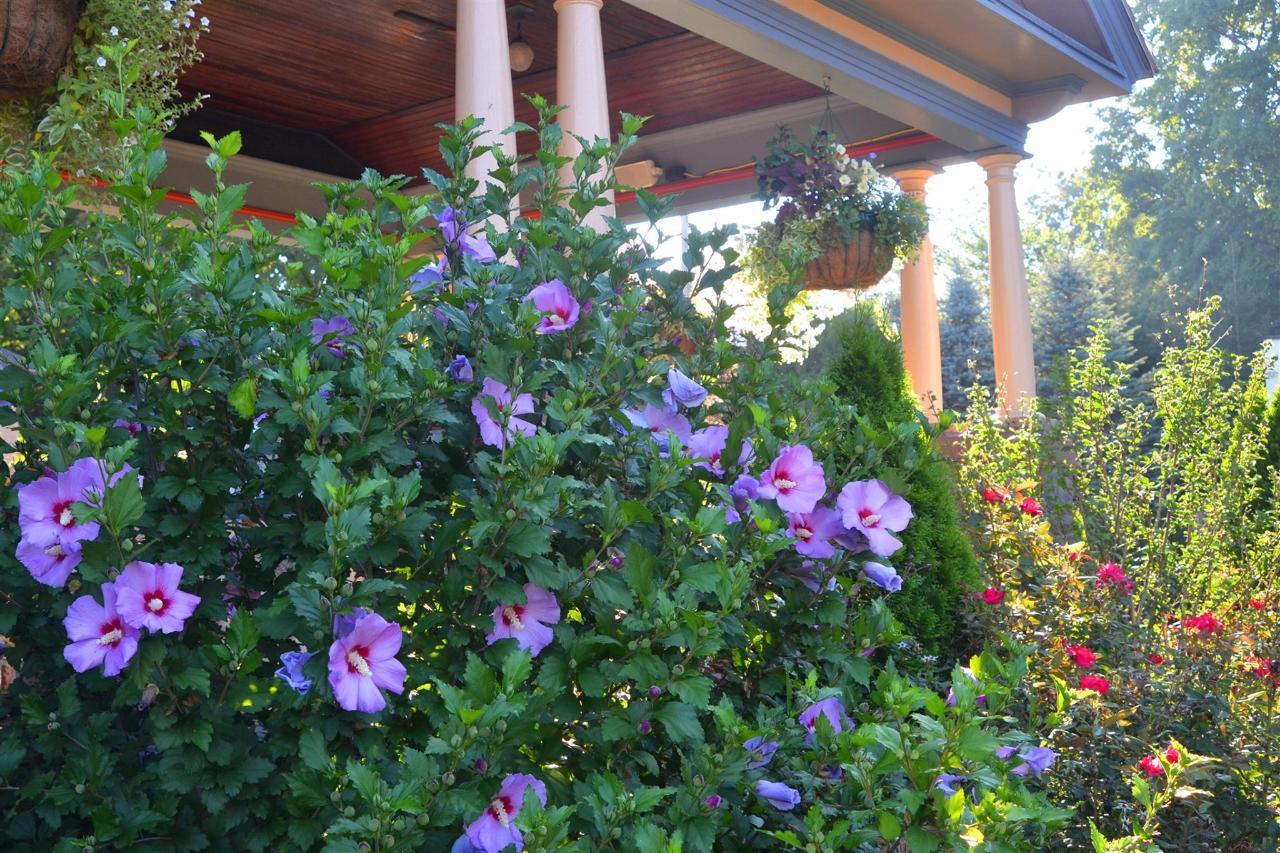 13-july-gardens3.jpg.1920x0.jpg