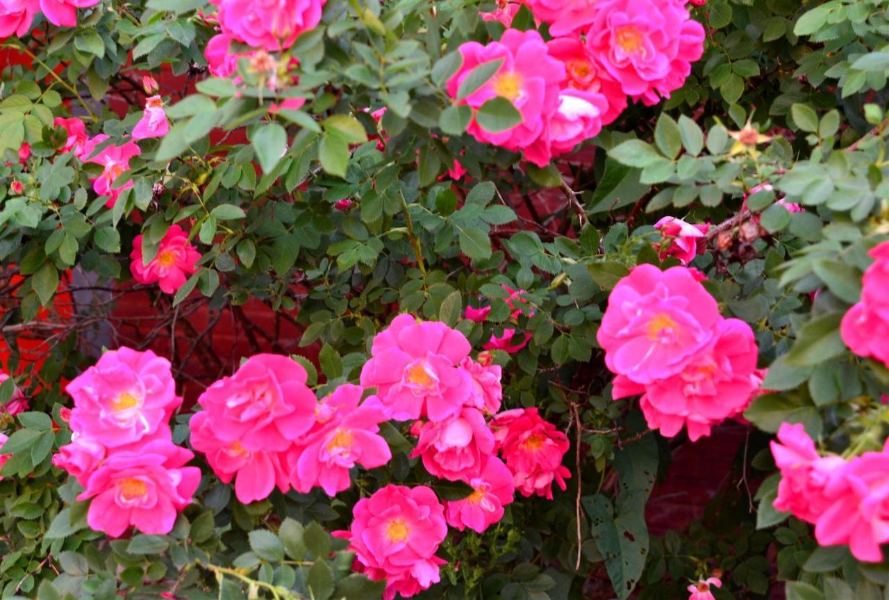 12-gardens-5-1.jpg.1920x0.jpg