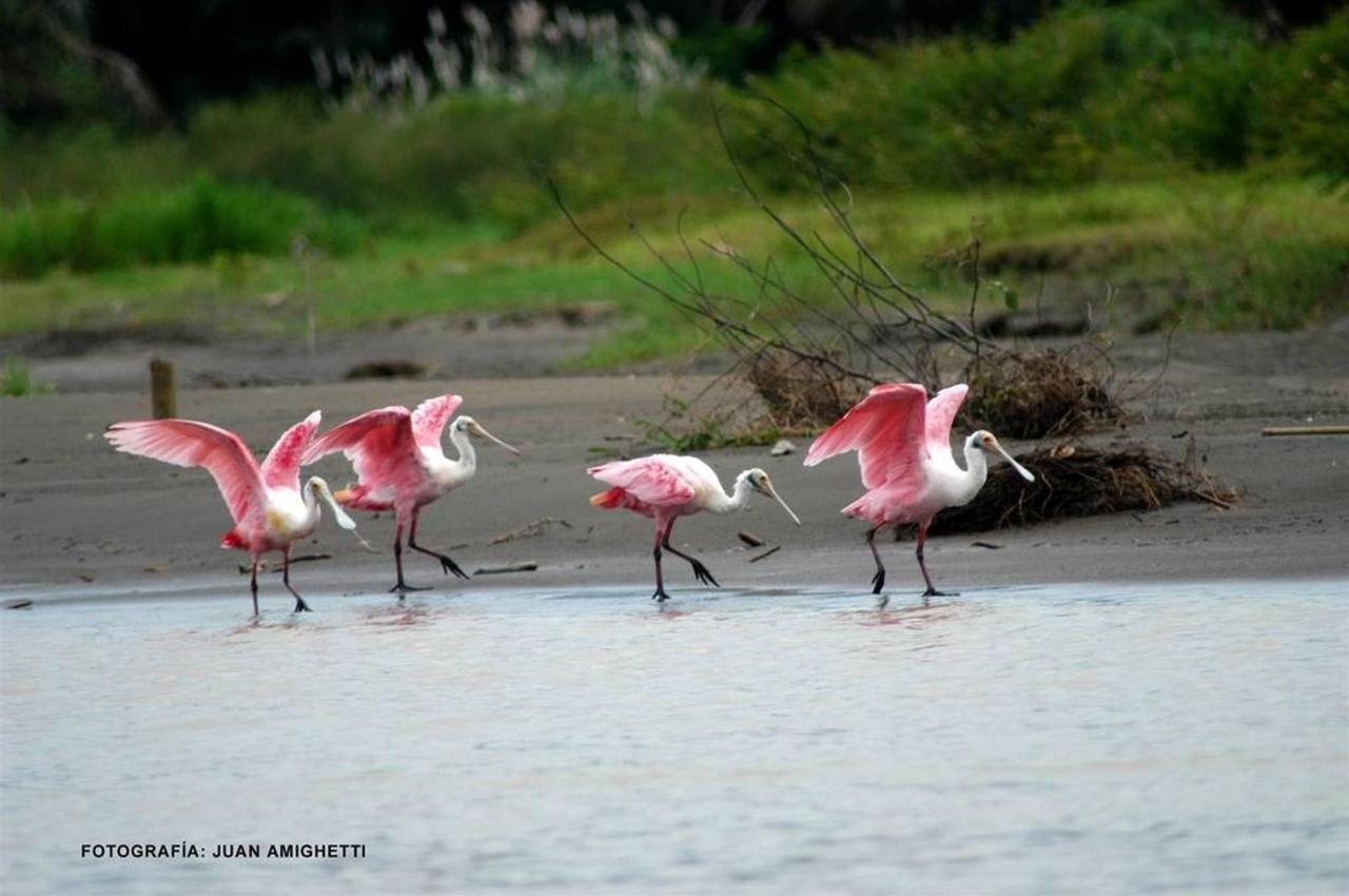 Bird Watching,Hotel Arenal Kioro Suites & Spa, La Fortuna, Costa Rica.jpg