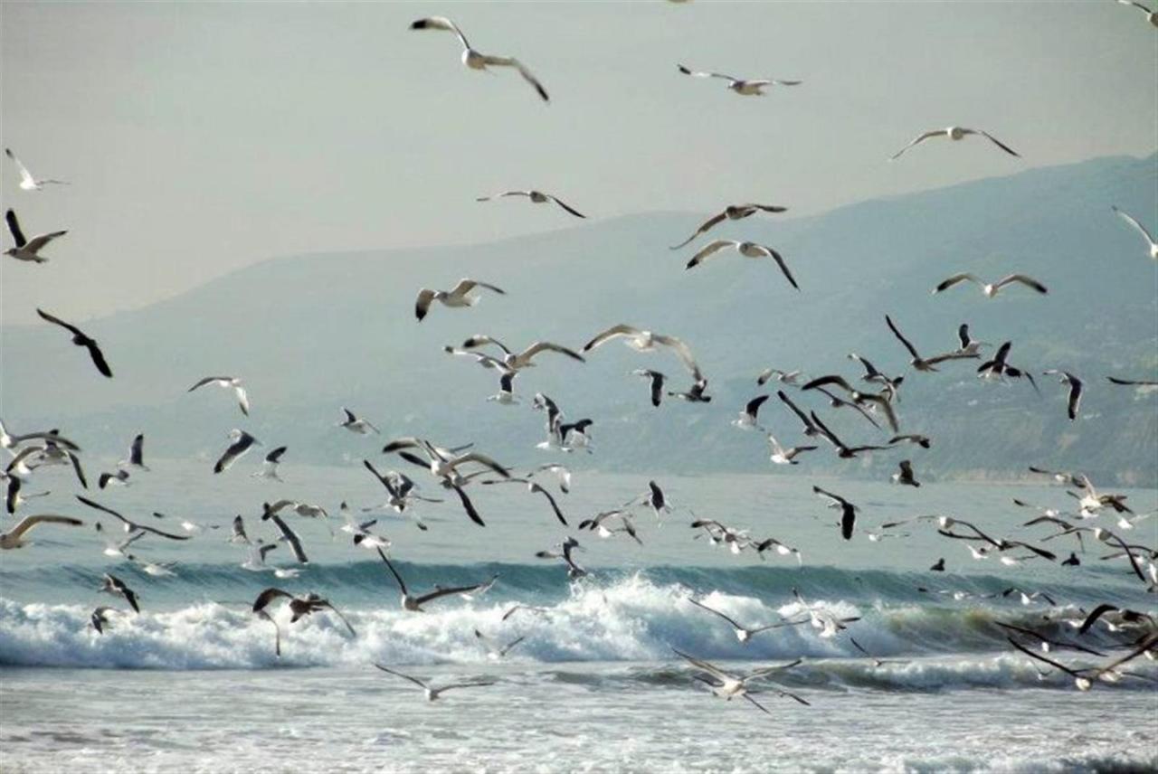 pacific-flyway.jpg.1920x0.jpg