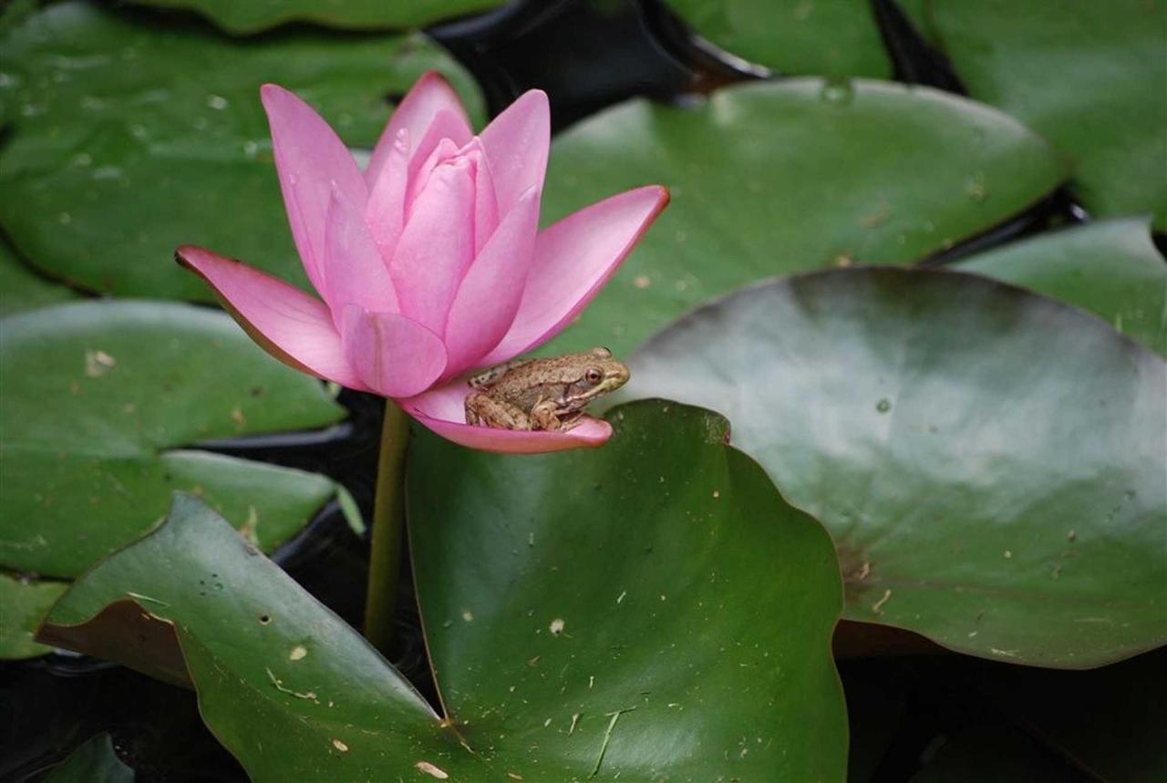frog-closeup-copy.jpg.1920x0.jpg
