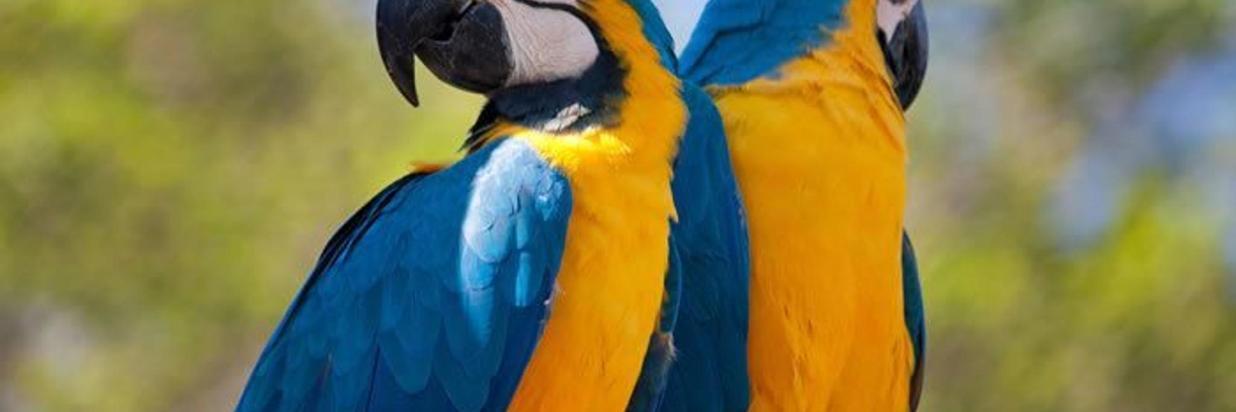 guacamayo-azulamarillo3-1.jpg