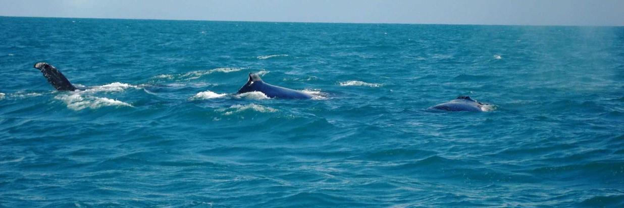 baleias-047.jpg