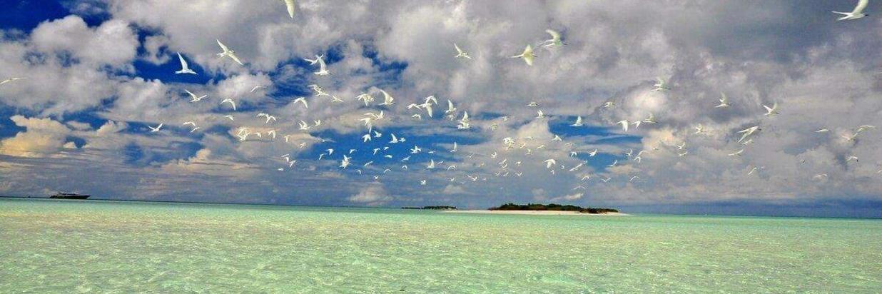 image-activites-picnic-island-ukulhas1.jpg