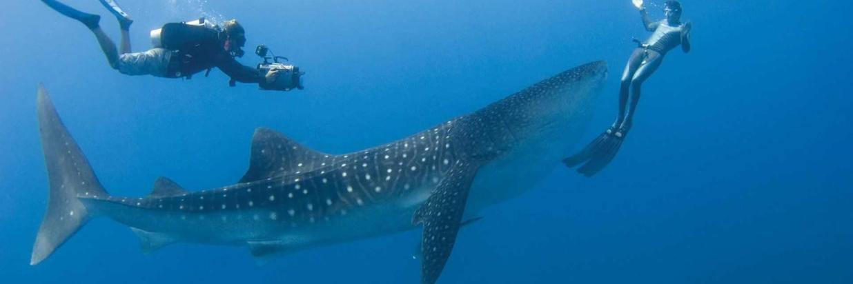 whale-shark-and-dive-packages-maldives.jpg