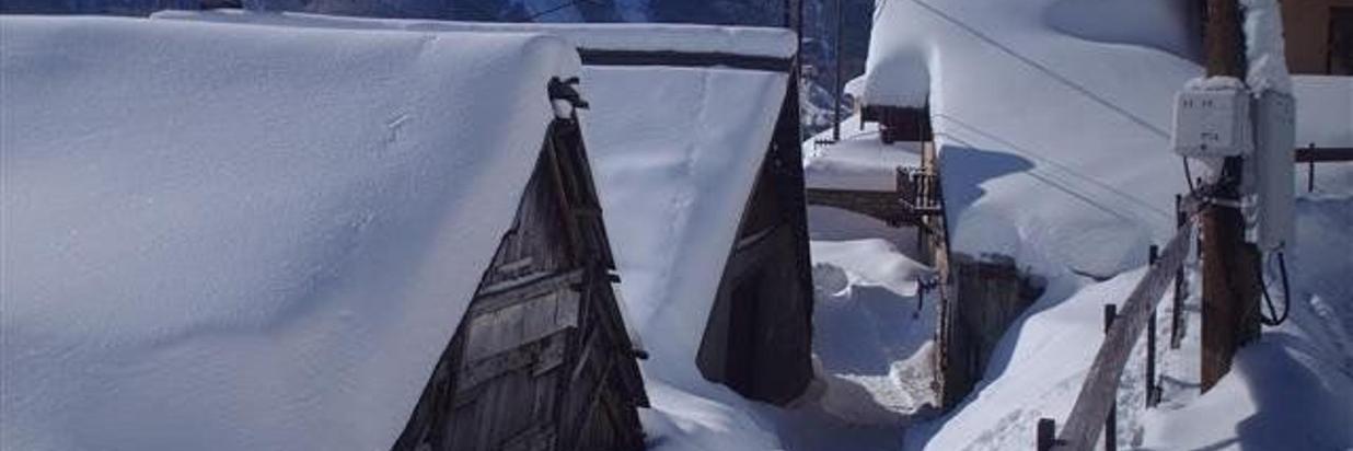 les-plautus-sous-la-neige.jpg