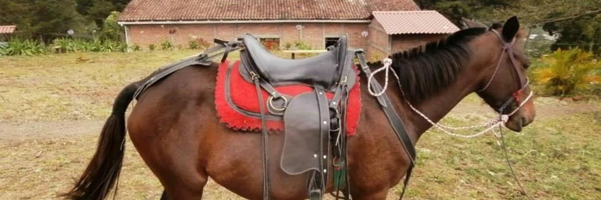 ecoalbergue-la-fundadora-caballo.jpg