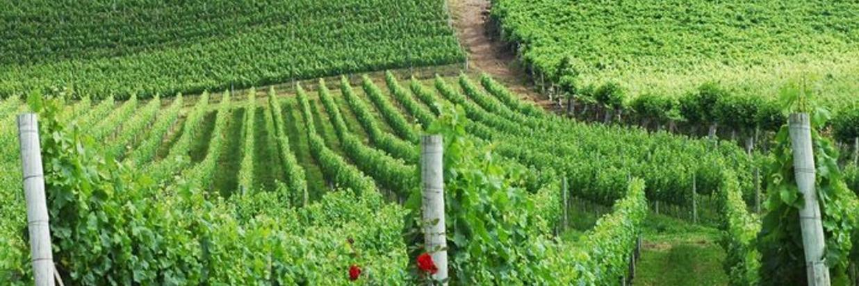 Região dos vinhedos na lista das cidades mais bonitas do Brasil