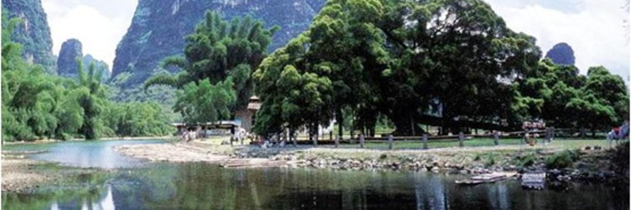 { Yulong River Bamboo Rafting & Big Banyan Tree }
