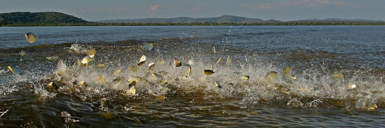 Pesca Pousada Rio Mutum
