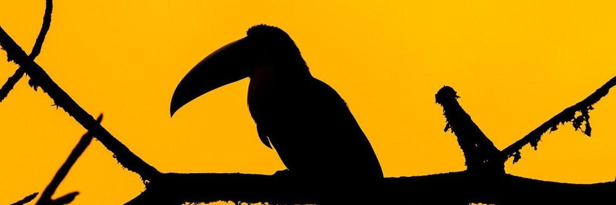 7-Day Meditation Retreat
