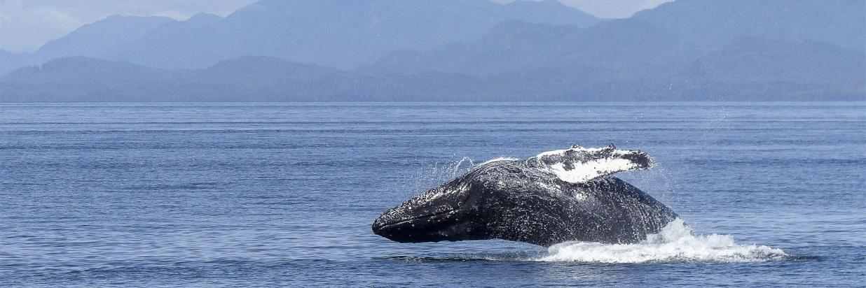 Whale Watching & Island Getaway Packages