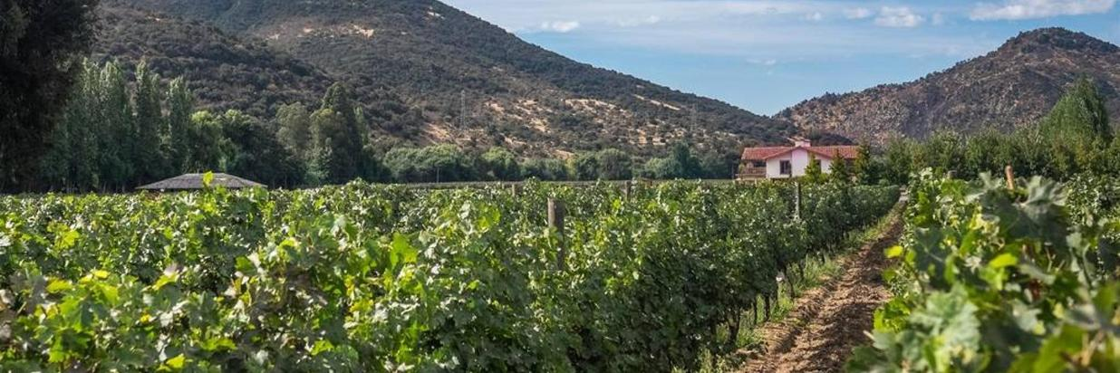 Winery Tour and Wine Tasting - Colchagua Valley