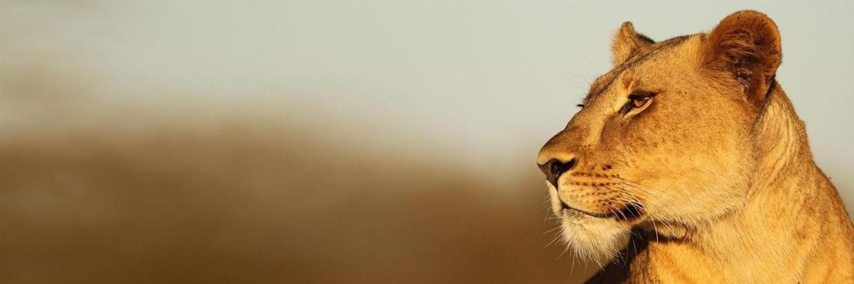 Thanda Safari