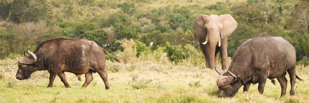 Your Big 5 Safari