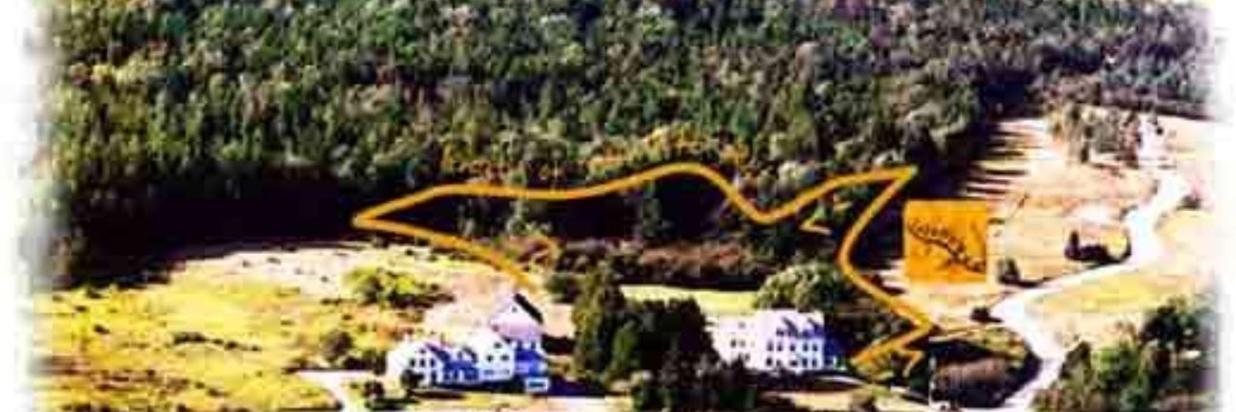 The Salamander Trail