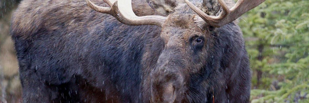 When to See Yellowstone Wildlife
