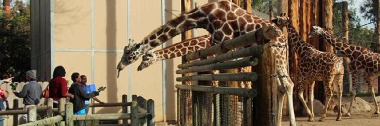 fresno-chafee-zoo.jpg
