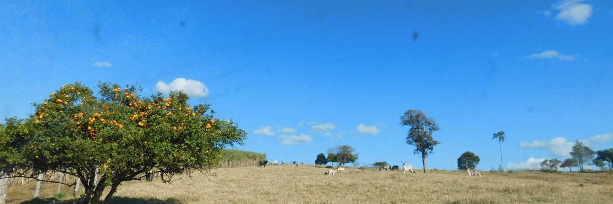 Atrações da Fazenda