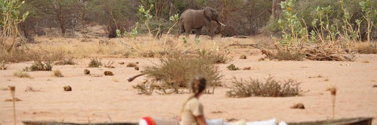 Saruni Rhino & Rhino Tracking