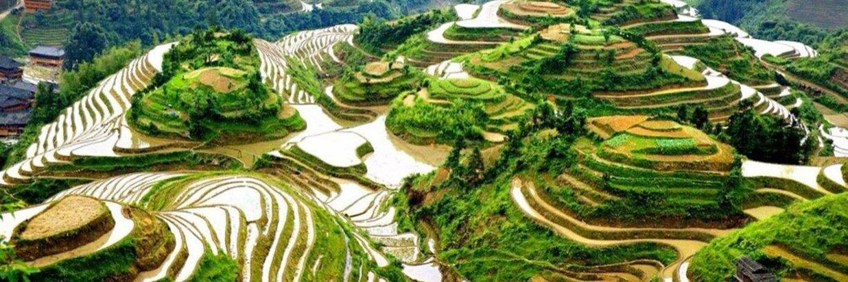 Longji Rice Terraces One Day Tour Package