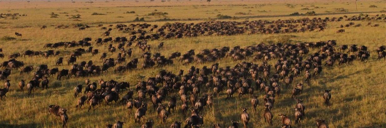 2017 GREAT MIGRATION