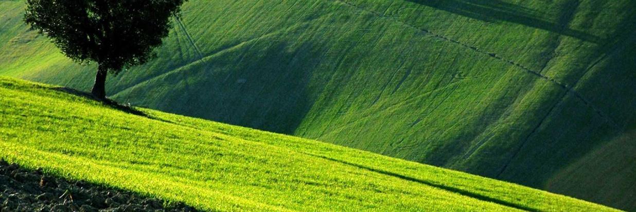 mare-marche-verde-2-1.jpg