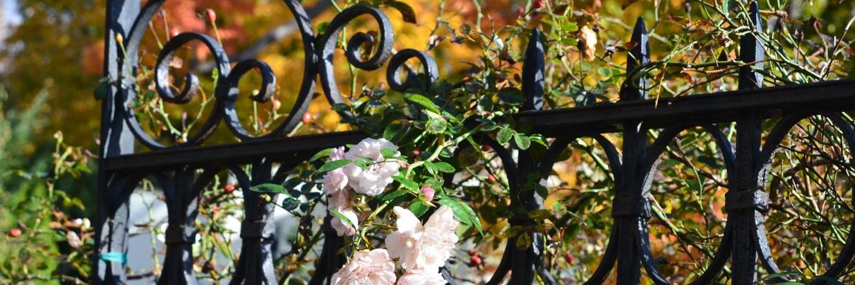 Fall in saratoga