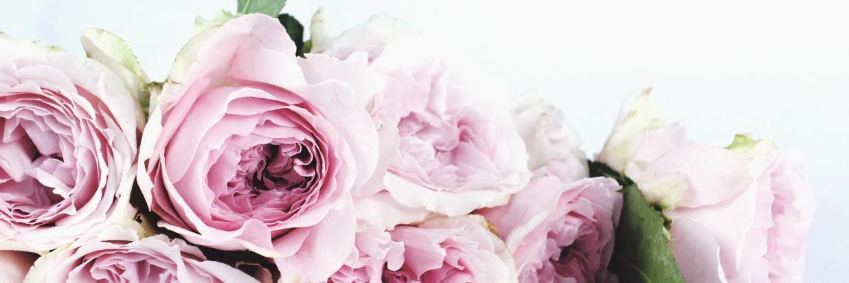 Flores frescas para tu amor