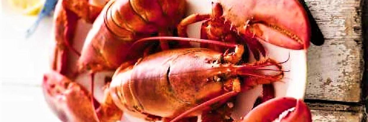 lobster test 418 (2).jpg