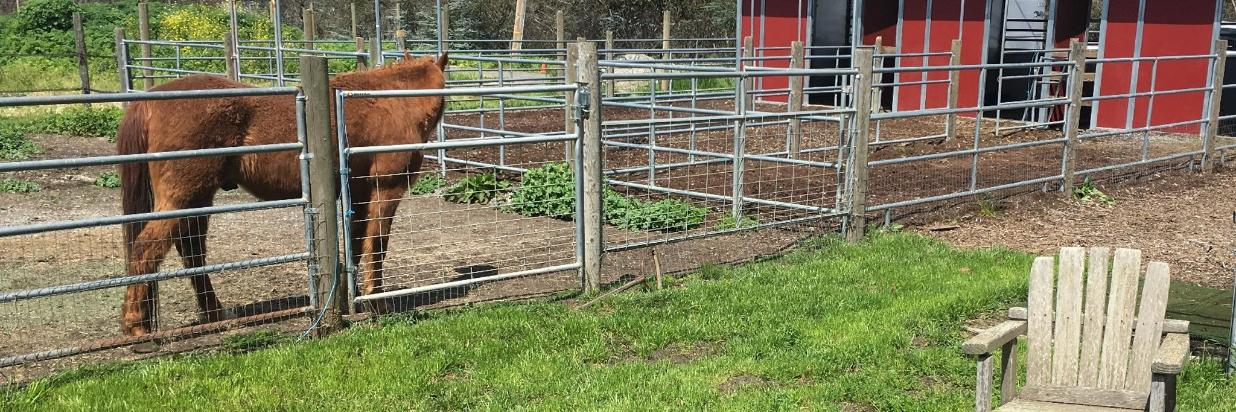 Horses at the Inn