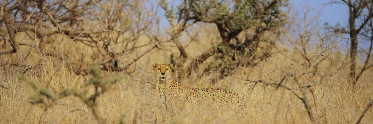 Safari Seasonal Special