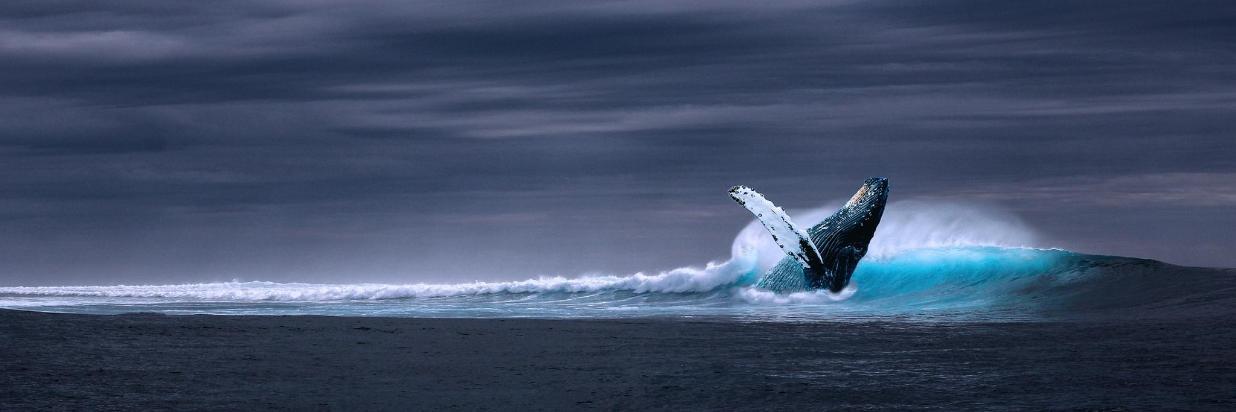 Whales and Wildlife Sea Adventures