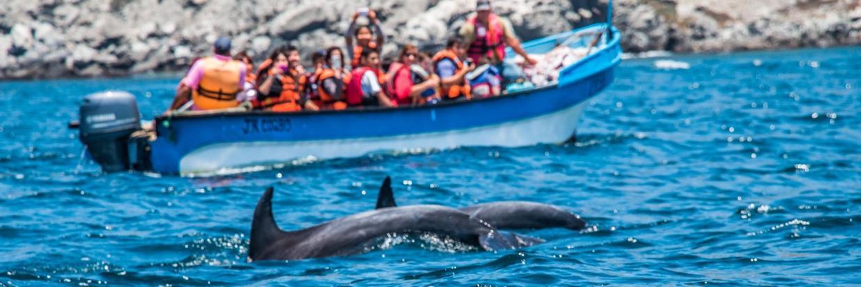 delfines.jpg