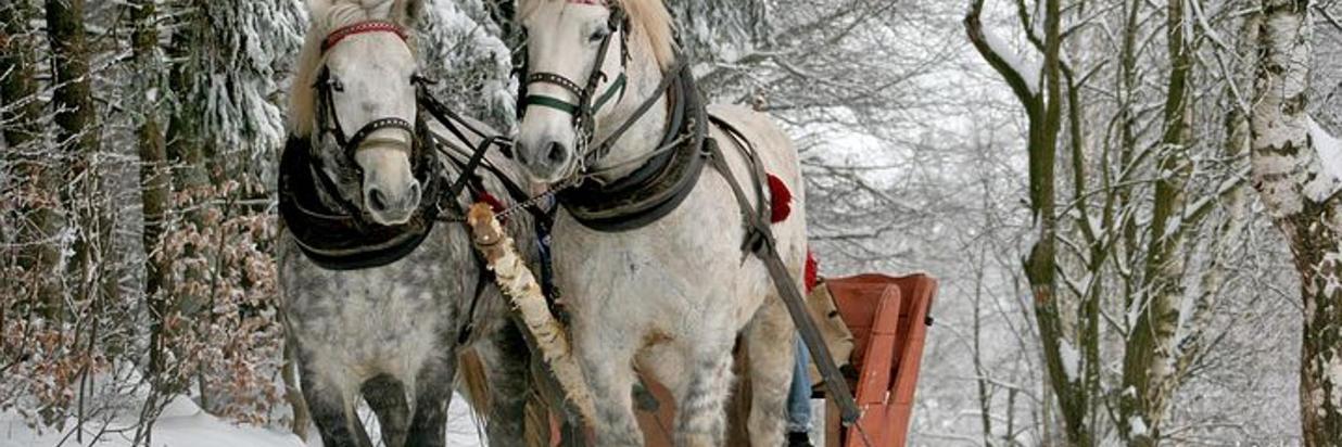 sleigh-ride-549727__480.jpg
