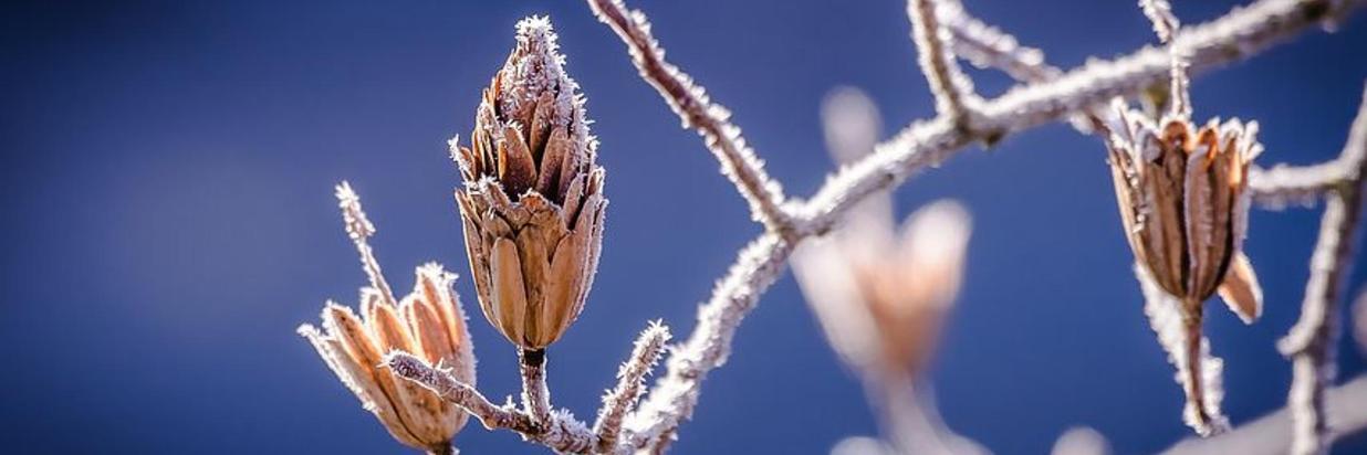 winter-598631__480.jpg