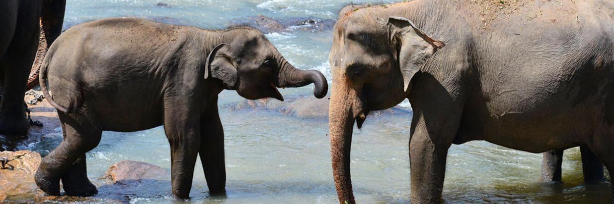 admire-gentle-giants-at-pinnawala-elephant-orphanage-209.jpg