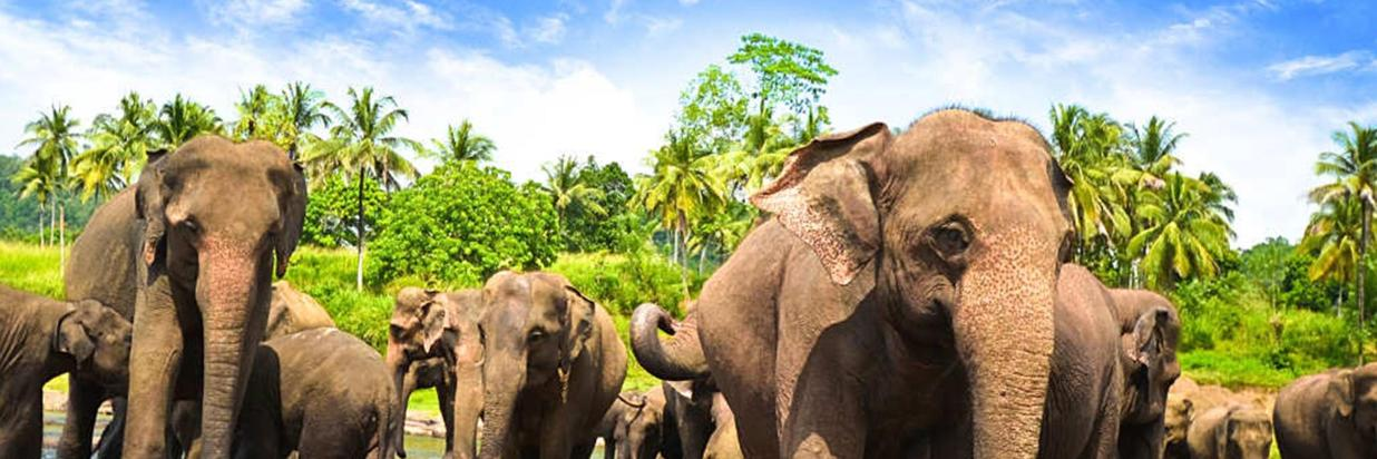 mejor-epoca-para-viajar-a-Sri-Lanka-4.jpg