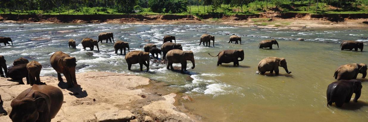 pinnawala-elephant-orphanage-sri-lanka.jpg