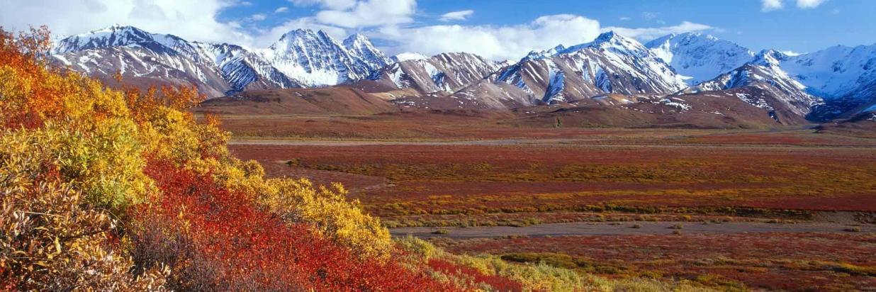 Denali fall colors.jpg