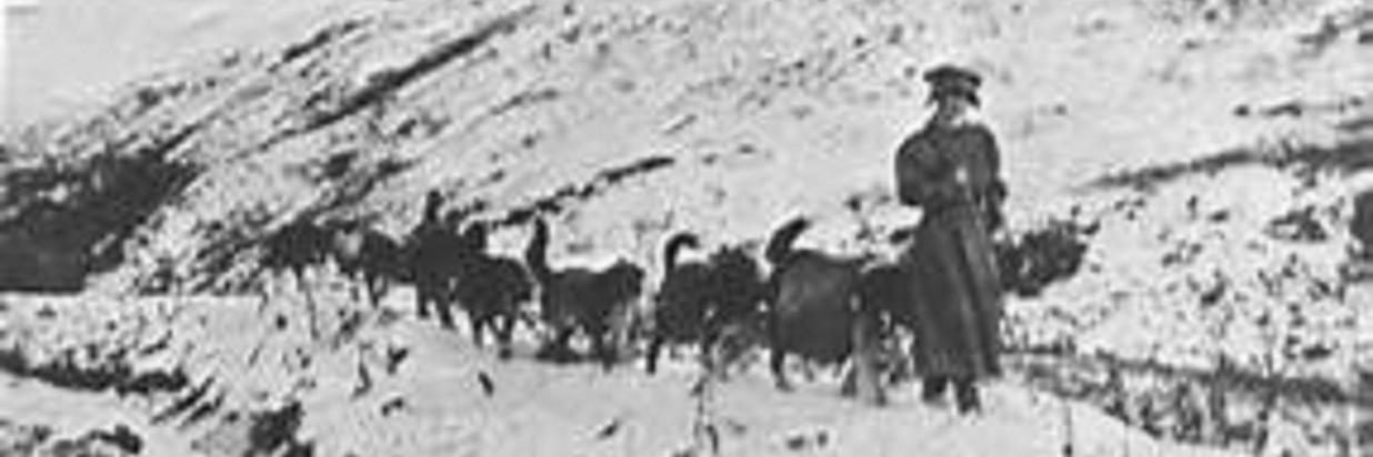 fanny quigley and sled dogs1500x.jpg