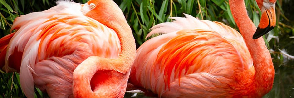 Flamingo- 640 x 427.jpg