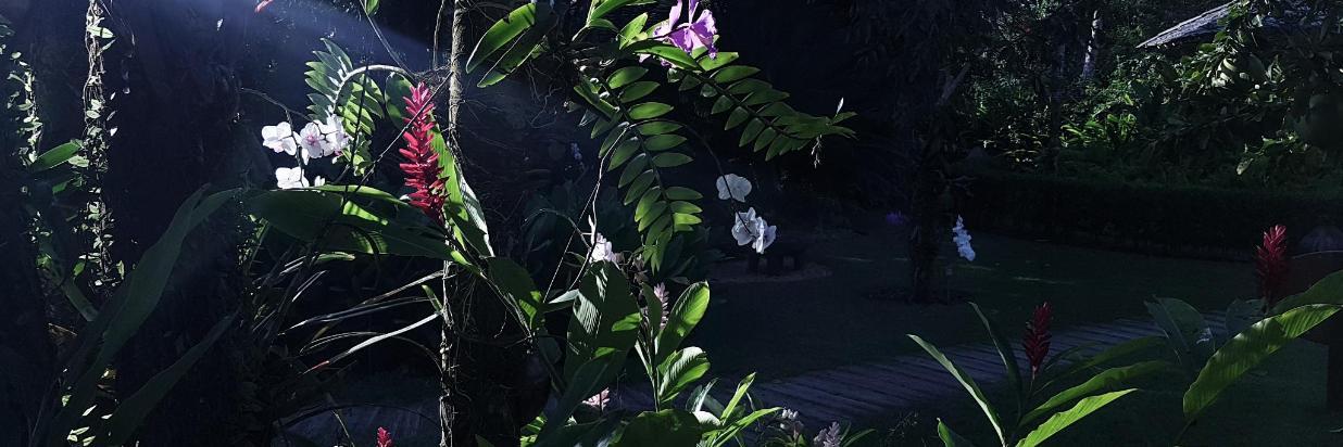 Orchids_Trancoso